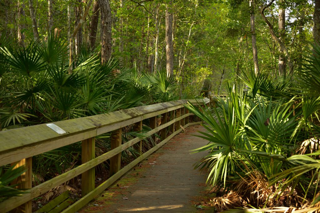 wooden boardwalk with trail and trees